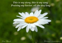Sue Nash daisy-blessed-assurance