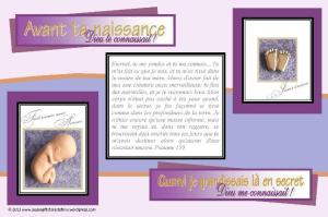 PGFE FRENCH Baby in Womb postcard-SAMPLE