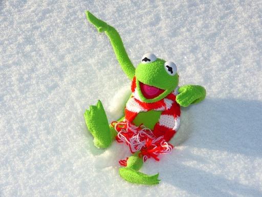 pixabay-snow-kermit