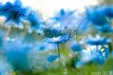 DarrellCreswell-beautiful-life