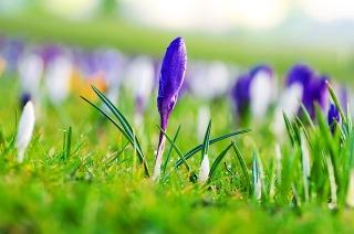 spring-flower-bulbs