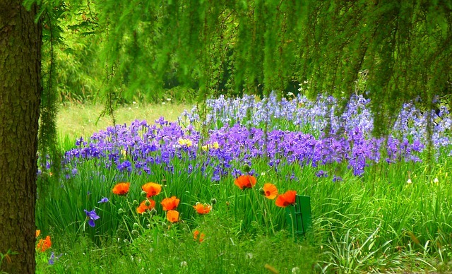 spring-flower-meadow