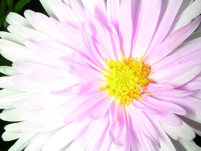 spring-flower-pink