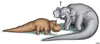 elephant and hippo with tails like a cedar