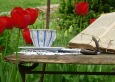 Bible with tulips, cup and glasses