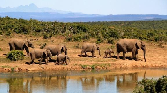 pixabay-elephant (12)
