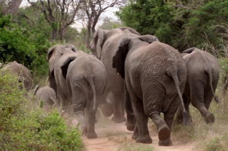 pixabay-elephant (17)
