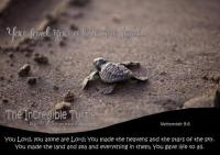 FREE printable Turtle Poster with Bible Verse