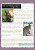 Kangaroo Free Printable Article for Kids from a Biblical perspective