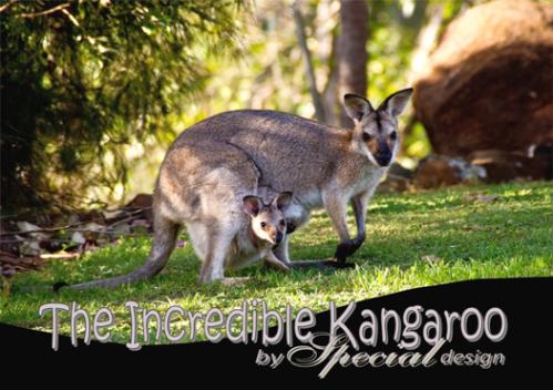 Kangaroo Article For Kids