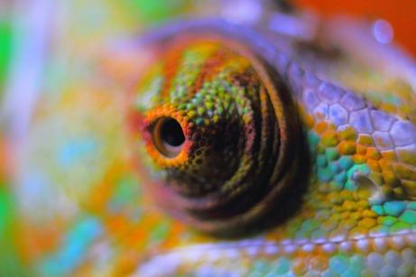 pixabay-chameleon
