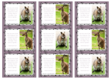 PGFE Kangaroo Wallet Cards A4