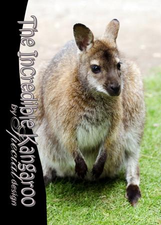 PGFE Kangaroo2