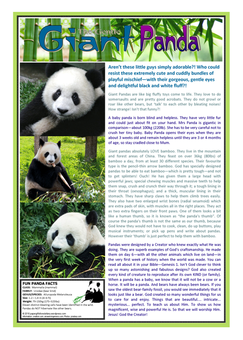 Panda Article For Kids Paper Gifts For Estefany
