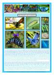 FREE PRINTABLE Butterfly article for kids giving glory to God as designer