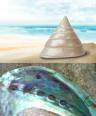 PGFE-pixabay-seashells