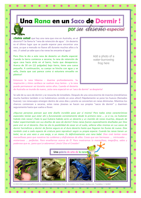 SPANISH Frog in a Sleeping Bag (water-holding burrowing frog) article for kids giving glory to God as designer; free printable