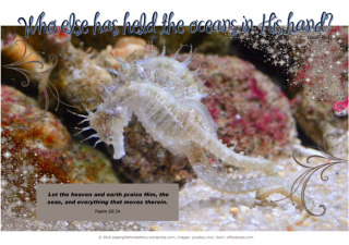 Seahorse - Bible Poster by Paper Gifts for Estefany with Bible verses from Isaiah 40:12 - Who else has held the oceans in His hand; and Psalm 69:34 - Let the heaven and earth praise Him, the seas, and everything that moves therein; free printable