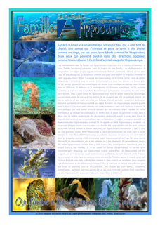 FREE seahorse article for kids in FRENCH giving glory to God as designer; free printable