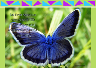 FREE Bible poster with Bible verse from Psalm 148:5; blue butterfly on lime green background; free printable