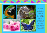 FREE Bible poster with Bible verse from Psalm 148:5; collage of photos (macaw, koala, pink roses, blue butterfly) on lime green, blue and purple background; free printable