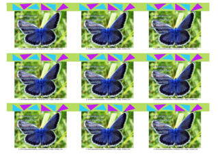 FREE Biblewallet cards with Bible verse from Psalm 148:5; blue butterfly; lime green background; free printable