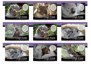 FREE Koala Wallet Cards on purple, black and white background with Bible verse from Psalm 13:5; free printable