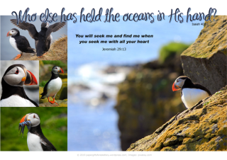 FREE Bible poster featuring the colourful puffins; Bible verses from Jeremiah 29:13 and Isaiah 40:12; free printable