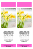 FREE Daffodil Bookmark with Bible verses from Romans 6:4-6; free printable