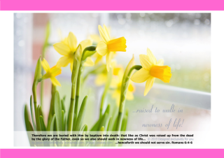 FREE Daffodil Poster with Bible verses from Romans 6:4-6; free printable