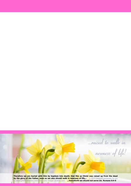 FREE Daffodil Stationery with Bible verses from Romans 6:4-6; free printable