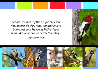 FREE Woodpecker poster with Bible verse from Matthew 6:26; free printable