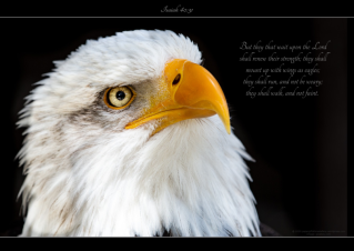 FREE Eagle Poster with Bible verse from Isaiah 40:31; free printable