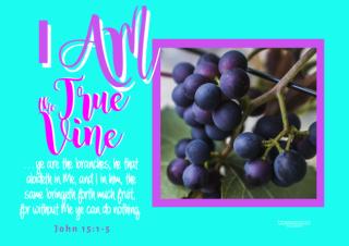 FREE Bible poster; I am the True Vine; free printable